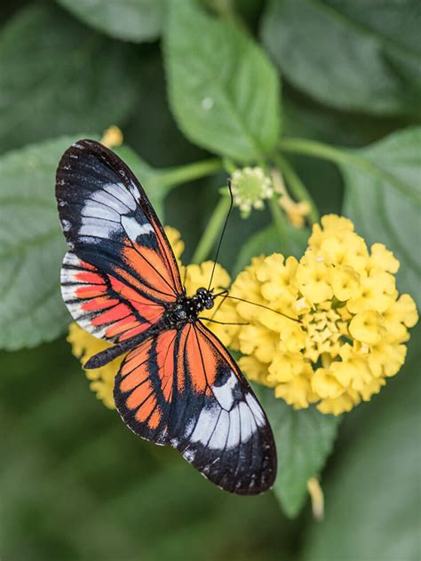 Butterfly - Free Jigsaw Puzzles Online