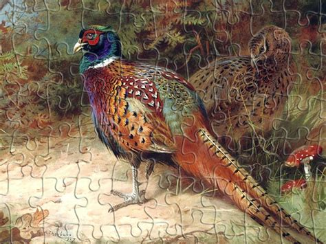Pheasant in the Undergrowth Jigsaw Puzzle