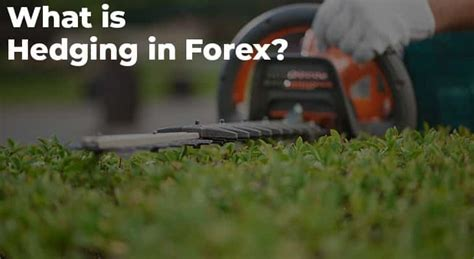 What is Hedging in Forex? - A Beginner's Guide | TradeFX